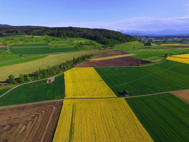 Zasady działania środków ochrony roślin